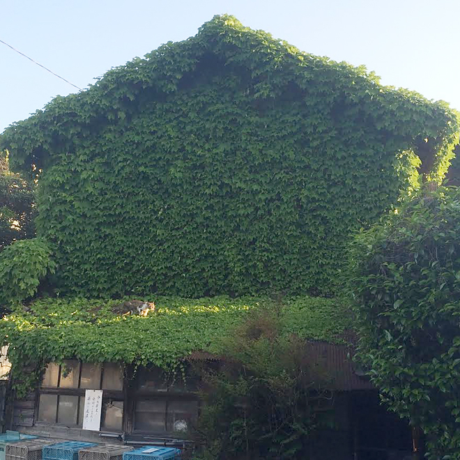 ツタの絡まる家/キャンプハウス