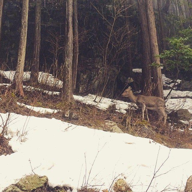 鳥取県地図帳の山奥で見かけた小鹿